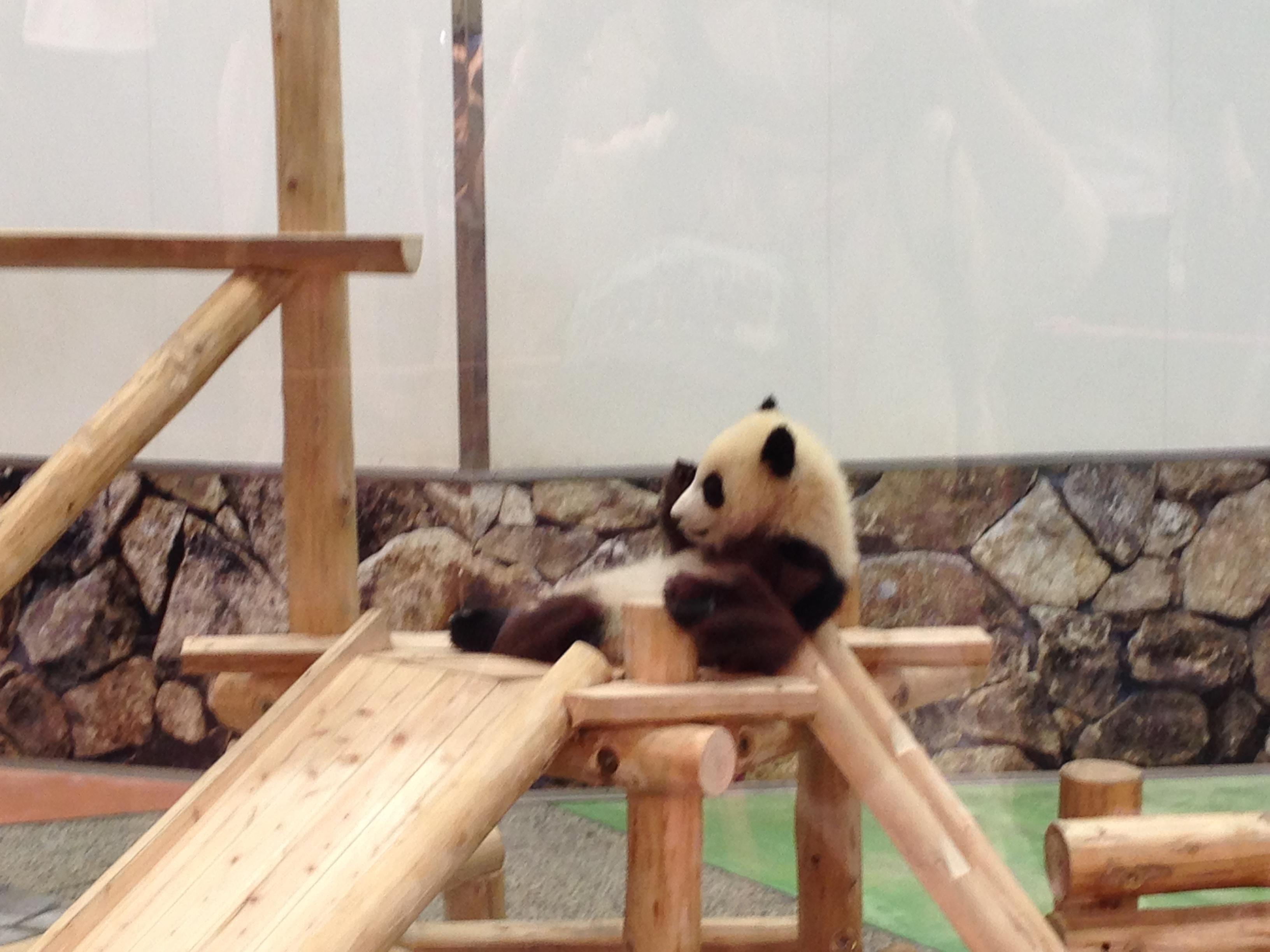 パンダを見て,気づいたこと~発達障がい支援に必要なこと
